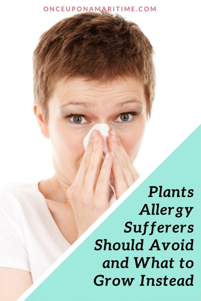 Plants allergy sufferers should avoid and what to grow instead